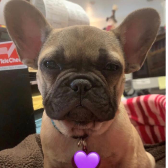 Gypsy</br> OFFICE DOG photo
